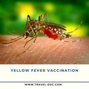 Yellow fever vaccine Birmingham